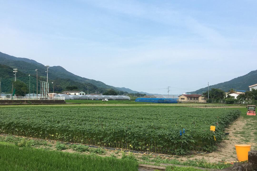 イチハラファーム農作業スタッフ〔野菜の収穫・梱包など〕画像
